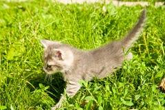 Little kitten Stock Images