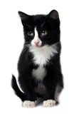 Little kitten. Looking on front Royalty Free Stock Image