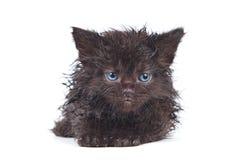 Little kitten. In white background Stock Images