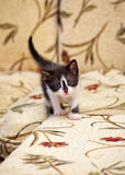 Little kitten Royalty Free Stock Photography