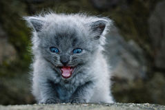 The little kitten. In the author's treatment Royalty Free Stock Images