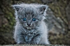The little kitten. In the author's treatment Royalty Free Stock Image