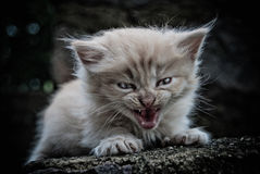 The little kitten. In the author's treatment Stock Photography