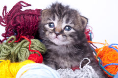 Little kitten in balls of wool Royalty Free Stock Photos
