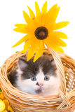 Little kitten in a basket Royalty Free Stock Photography