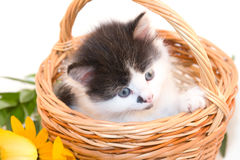 Little kitten in a basket Royalty Free Stock Photos