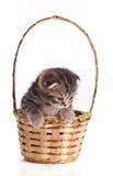 Little kitten in the basket Stock Photography