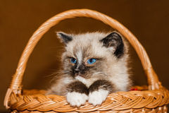 Little kitten in a basket Stock Photos
