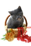 Little kitten in a basket with Christmas toys. royalty free stock images