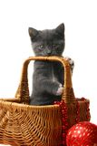 Little kitten in a basket with Christmas toys. Stock Photo
