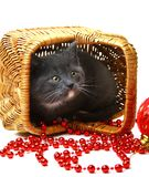 Little kitten in a basket with Christmas toys. Stock Photos