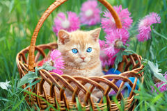 Little kitten in the basket Stock Photography