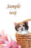 Little kitten in a basket and flowers Stock Images