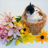 Little kitten in a basket and flowers Stock Image