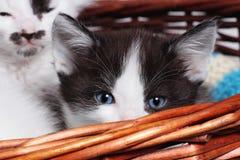 Little kitten in a basket Royalty Free Stock Image