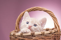 Little kitten in the basket Royalty Free Stock Photos