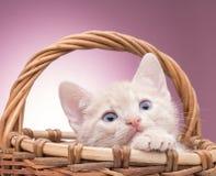 Little kitten in the basket Royalty Free Stock Photo