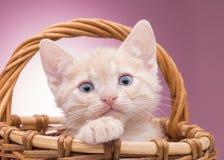 Little kitten in the basket Stock Photo