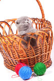 Little kitten in the basket Stock Image