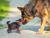 Little kitten and big dog. Little stray kitten rubing against bid dog Royalty Free Stock Photo