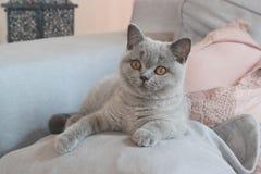 Little kitten blu coat Stock Image