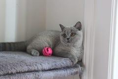 Little kitten blu coat Stock Images