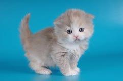 Little kitten on blue background Stock Image