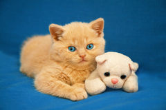 Little kitten on blue blanket Royalty Free Stock Photography