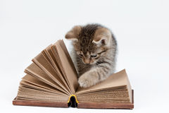 Little Kitten And Book Stock Photos