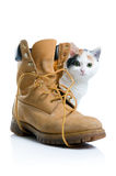Little kitten and boot Royalty Free Stock Image
