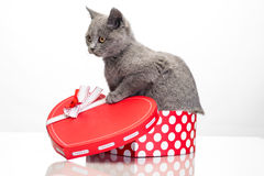 Little kitten in a box Royalty Free Stock Images