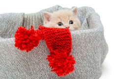Little kitten in box with knitted scarf Royalty Free Stock Photos