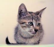 Little kitten with a broken lip. Little kitten sick kaltsiviroz. Kalitsiviroz - an infectious disease of cats, which manifests itself in typical cases, fever Stock Photo