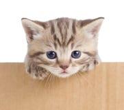 Little kitten in cardboard box Royalty Free Stock Photos