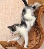Little kitten climbs playhouses Stock Images