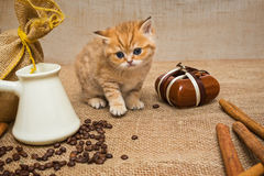 Little kitten  and  coffee Royalty Free Stock Photos