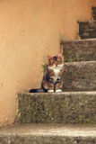 Little kitten on concrete stairs. Portrait of kitten sitting on concrete stairway Stock Images