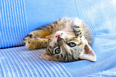 Little kitten on a couch Royalty Free Stock Images