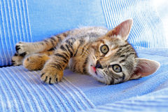 Little kitten on a couch Royalty Free Stock Photo