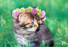 Little kitten crowned with a chaplet of clover Royalty Free Stock Photography