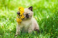 Little kitten crowned dandelion chaplet Royalty Free Stock Photos