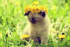 Little kitten crowned dandelion chaplet. Walking in the grass Royalty Free Stock Photo