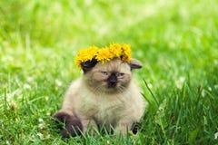 Little kitten crowned dandelion chaplet Stock Image
