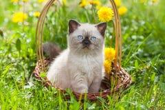 Little kitten in the dandelion flowers Stock Image