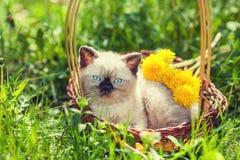 Little kitten in the dandelion flowers in sunny day Stock Images
