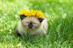 Little kitten on the dandelion lawn Stock Photography