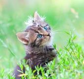 Little kitten and dandelion Stock Image