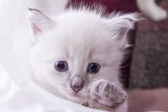 Little kitten developing world. Little fluffy kitten developing world with interest stock image