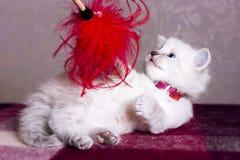 Little kitten developing world. Little fluffy kitten developing world with interest royalty free stock images