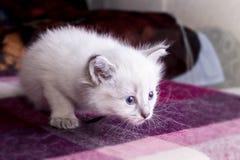 Little kitten developing world. Little fluffy kitten developing world with interest stock photo